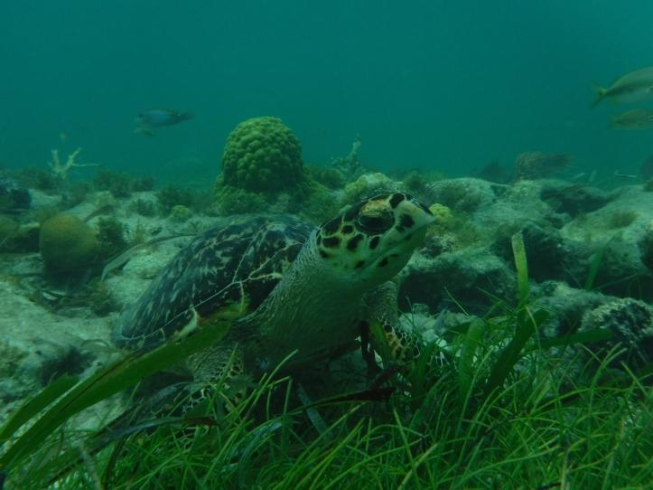 10Cancun_Mexico_Mr.Turtle and Me_Nicole Bergstrom