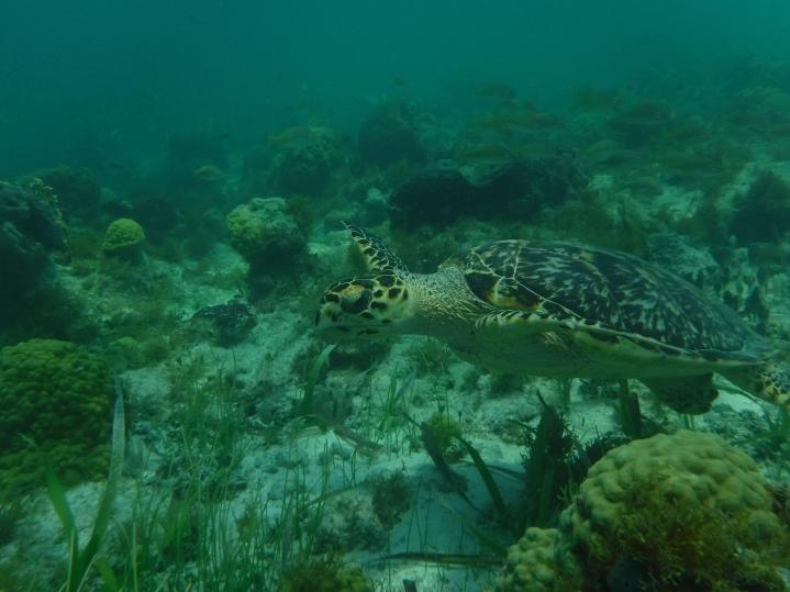 6Cancun_Mexico_Mr.Turtle and Me_Nicole Bergstrom