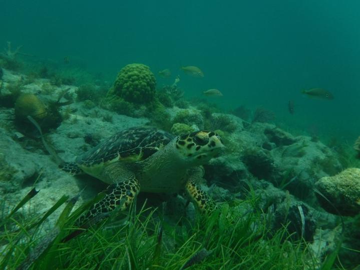 8Cancun_Mexico_Mr.Turtle and Me_Nicole BergstromJPG