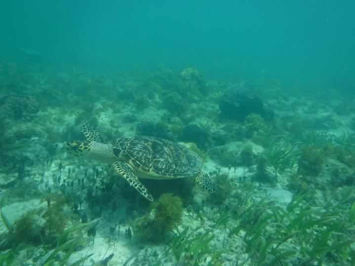 9Cancun_Mexico_Mr.Turtle and Me_Nicole BergstromJPG